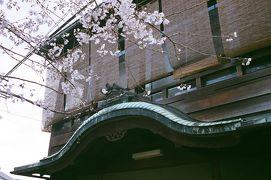 京の都・春爛漫 五条楽園から祇園界隈の色街をぶらぶら歩き旅