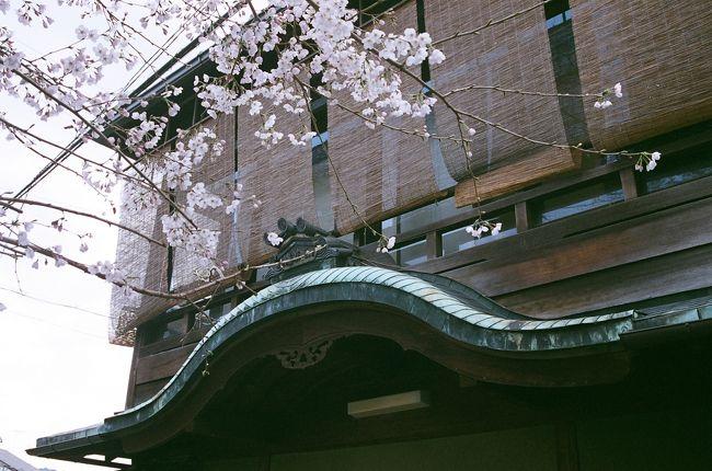"""桜もちらほら咲き出して心も浮き浮き弾む頃~、京都も春本番の観光シーズンを迎えて嵐山に東山、街中に至るまで観光客がどっと押し寄せるこの季節。<br /><br />そんな中でも忘れ去られた京都?…、少しディープな地域、いや!タブーな界隈と言われている「五条楽園」に足を向けてぶらぶら歩いてみました。<br /><br />元々は島原と並んで遊郭が在った五条界隈~、その後、明治・大正・昭和と""""遊里から赤線地帯""""として公然に認められてきた京都の影の部分が、まだ色濃く残っているエリアです。<br /><br />で更に五条大橋を渡り、宮川筋から八坂の塔へ、三寧坂を下って祇園界隈へと、古の都より花街としての花見小路へと向かいます。<br /><br />観光地でありながらも普通に商いや暮らしが息づいている街~、見方によってはこれだけの建築物や人の営みが今も残っているエリアは京都でも数少なく成って来ていますね~。<br /><br />一番の風情を楽しむなら、夕暮れ時から夜に掛けて…なのですが、今回は普通に日中にぶらぶら歩きます。<br /><br />*PS 大阪新世界はおまけです。"""