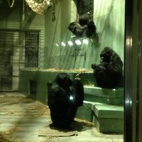 春よ来い 、早く来い、そんな気持ちで東山動物園散策です。