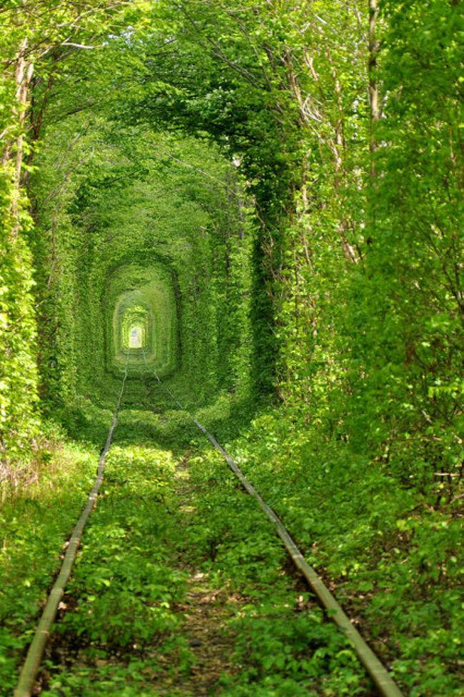 宮崎駿監督のアニメ「となりのトトロ」で、トトロに会うために4歳のメイちゃんが木々のトンネルを通り抜ける場面を覚えている人は多いと思います。<br /><br /> ウクライナのクレヴァンKlevanに、木々に囲まれたトンネルが実際にあることをご存知ですか?<br /><br />「恋のトンネル」と呼ばれています。<br /><br /> クレヴァンはキエフから西へ約350km離れた小さな村です。年代記に1453年に初めてその名が登場する歴史のある町です。1490年頃に周りが深い堀で囲まれたクレヴァンの城が建てられました。城は度々外敵の攻撃を受け、現在は城跡しか残っていません。クレヴァン村には、ほかにあまり見学する場所がないにもかかわらず、その幻想的なトンネルは多くの人たちの注目を集めています。トンネルの長さは約2kmで、不思議な自然の産物として認められています。<br /><br /> ウクライナのトンネルはとてもロマンチックで、色々な伝説の発祥の地になっています。<br /><br /> 伝説を簡単に紹介すると、次のような話です。<br /><br />「クレヴァン村にはウクライナのロミオとジュリエットが住んでおり、彼らの家族に二人が結婚することを禁じられた後、ジュリエットは走ってくる電車に飛び込みました。彼女が亡くなった場所にトンネルが出現しました。」<br /><br /> 実際には、何十年か前に地元の木材加工工場が木材を運搬するために森の中に線路を引きました。線路の両脇の木々が生い茂り、徐々に絡まってできたのがトンネルの始まりです。現在、この線路上を1日2回電車が走っています。このトンネルは、カップルが大好きなところで、トンネルの中を歩いている人たちをよく見かけることがあります。列車が通るときに、恋人たちが同じ願い事をしてキスをすると、それが真心の愛であれば必ず願いごとがかなうと言われています。<br /><br /><クレヴァンまでのアクセス><br /><br />キエフからリウネ市まで鉄道で行き、リウネ市のバスステーションでルーツィク市行きのマルシュルートカ(乗り合い自動車)に乗り、クレヴァン駅で降ります。トンネルはクレヴァン村の中心から7km離れたところにあります。<br /><br />皆さん、機会があれば、ぜひ行ってみてください。もちろん、季節はいつであっても、トンネルはとても素敵ですが、私には夏の緑が一番よかったですね。<br /><br />http://www.jic-web.co.jp/study/jclub/info.html