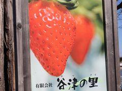 2013年 1月 美味しいイチゴ狩り・直売を近場の「谷津の里」に求めて~章姫と紅ほっぺ