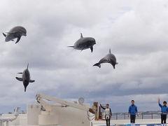 美ら海水族館 ☆ 楽しさ いっぱい♪ ~ イルカが飛んだ日