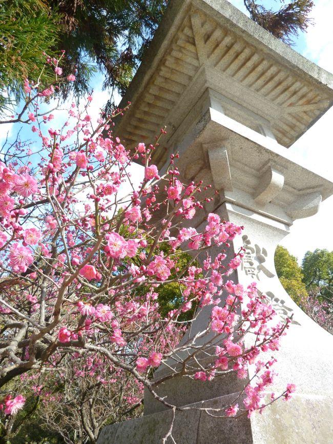 九州ツアー最後の1日は太宰府天満宮と二日市温泉です。<br />毎日温泉入って神頼みして、ちょっとは美人になったでしょうか。<br /><br />大宰府はちょうど梅の見ごろ・・・の若干手前くらいでした。<br />でもいい天気になりゆっくり参拝できました。<br />さらに九州国立博物館ではボストン美術展が開催されていてこれも見応えありました!<br /><br />二日市温泉は九州最古の温泉と言われているからか平日なのにかなりにぎわっていました。<br />