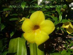 2012年 夏休み 今年4回目の渡比 逝き過ぎだろぉ・・・#20 マニラ・セブ島・ダバオへ逝っちゃいます サマル島パラダイスアイランド2日目の朝 良い天気です