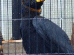 江戸川区自然動物園の見学