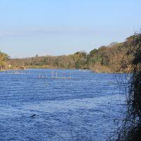 利根川沿いに残る 古利根沼 散策