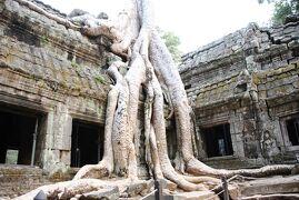 Cambodia クメールの微笑み (32/33)  シェムリアップ タ・プローム (1月27日)