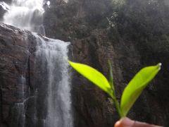 私の大好きな国ナンバーワンに輝いたスリランカ⑤ヌワラエリアへ潜入