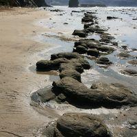 Solitary Journey [1162] 日本海を実感!打ち寄せる荒波を眺めながら千畳敷を歩く<国指定天然記念物'石見畳ヶ浦'>島根県浜田市