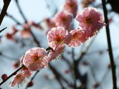 春さんぽ 上野動物園~湯島天神~小石川後楽園