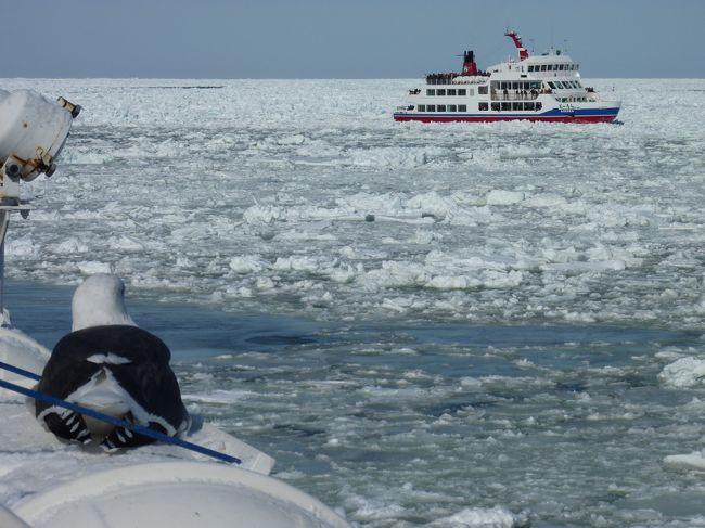 北海道の冬の醍醐味、流氷を見たくて、ツアーに参加しました。知床オーロラファンタジーや層雲峡氷瀑まつりも。