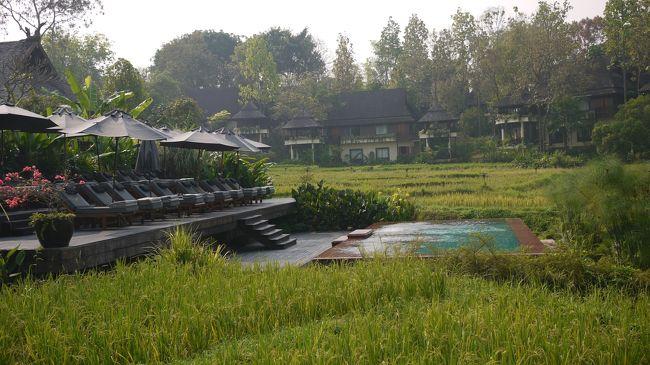 50日間にわたる、ファーストクラスで世界一周旅行も終わりに近づき、ファイナルはタイの古都チェンマイのフォーシーズンホテルで、旅の疲れを癒しました。<br /><br />日本へ帰国する前に、ゆったりと、リゾート気分に浸り今までの長旅の疲れをすっかり癒しました。<br /><br />なお、今までの世界一周旅行記の詳細は↓にまとめました。こちらもご覧ください。<br />        http://tnplan.net/<br /><br />フォーシーズンホテル・チェンマイはタイの山奥にひっそりとたたずむ隠れ家的リゾートホテルである。いつも通り、ホテルの入り口は質素であるが、中に入ると、広大なホテルの敷地が続く。<br /><br />清潔で豪華なインテリアの広々とした各部屋には、美しいライステラスが眺められる十分大きなあずま屋がつながっている。涼しい風が流れているあずま屋で、冷たいワインを飲みながら、極上な時間を楽しめる。<br /><br />プールも大小二つある。特に下段にある小さいほうのプールはライステラスに面しており、目の前に広がる緑の稲田を借り切った感じの贅沢な気分に浸れる。<br /><br />お勧めは、特別なレストランでのタイ料理教室デナーである。<br />タイのベスト10に入るシェフの主宰で、全部で14品出てくる。目の前で料理してくれる。<br />これが、本当に美味しい!<br /><br />この料理教室は人気があり、参加できる人数は8名限定である。幸い参加予約ができた。<br /><br />朝の散歩の途中、料理教室会場を覗いたら、ちょうどシェフがいた。<br />ニコニコしながら、「美味しくて、量が多いから、昼食抜きで参加してください!」と言った。その通りであった!<br /><br />目の前で、シェフが説明をしながら、料理を作り上げる。<br />そのまま、タイ民族衣装のウエイトレスさんが、配膳してくれる。<br /><br />ホテルでは、貸自転車があり、チェンマイ郊外の田舎道を楽しめた。<br />出るとき、迷子になっても、困らないように、非常用携帯電話とお水と地図を渡された。<br /><br />何十年か前の日本を思い出させる素朴な田園風景である。<br /><br />ファーストクラスで世界一周旅行のファイナルにふさわしいリゾートホテルであった。定年記念の夫婦の自分たちにご褒美である。なによりのごちそうになった。<br /><br />又行ってみたいホテルでもある。<br /><br />以下写真集をお楽しみください。<br /><br />