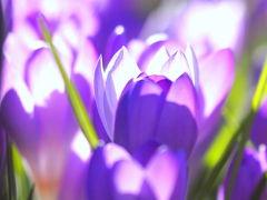 スノーシューで滑っちゃおう~@グラウスマウンテン と 早春の花(バンクーバー散策)