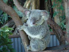 オーストラリア キュランダ