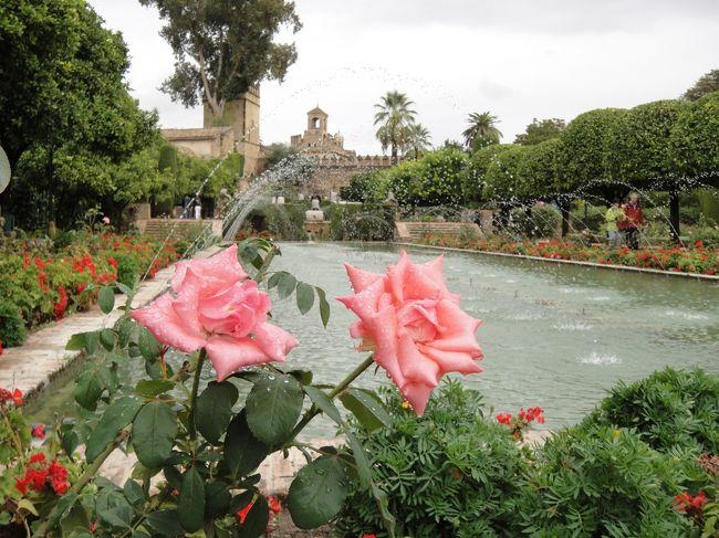 """<br />2012年7月〜10月までの、3か月のヨーロッパ周遊記録(Vol.66)です。<br />現在、13カ国目スペインに滞在しています。<br /><br />9/27〜9/30はマドリッドを拠点とし、マドリッド市内、セゴビア、コルトバ、トレドを1日ずつ訪れました。<br />≪旅程≫<br />・9/27 マドリッド市内半日観光<br />・9/28 セゴビア観光<br />・9/29 コルトバ観光★<br />・9/30 トレド観光→長距離バスでボルドーへ移動<br /><br />コルトバは、マドリッドから日帰りするには少し遠いのですが、イスラム文化が溶け込んだ興味深い街でした。イスラムとキリストの宗教が共存したモスク""""メスキータ""""、入り組んだ路地のユダヤ人街・・・今まで持っていたヨーロッパのイメージを一気に覆されたように思います。<br /><br />写真はアルカサルの庭園です。<br />※1ユーロ=100〜104円<br />(スペイン語の綴り記号が文字化けするので、なしで表記します。)<br /><br />"""