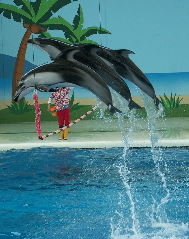 水族館もやっぱりタダに限る!・・・とは言え、水族館のあり方を考えさせられた『八景島シーパラダイス』