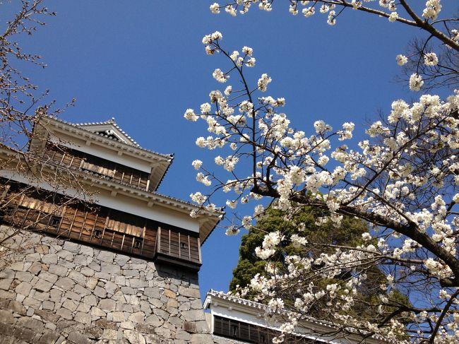 いつもは海外へ一緒に行く友人と初の国内旅行。<br />友人は九州初上陸、わたしは20何年ぶり?の熊本へ、九州新幹線・さくらに乗って行ってきました。<br />黄砂、PM2.5、花粉が乱れ飛ぶ中、レンタカーで観光、熊本名物を満喫しました。<br /><br />最終日は熊本城をゆっくり見学しました。<br />