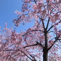 春はまだか?伊豆高原の温泉宿でのんびり&熱海をブラブラ