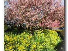Solitary Journey [1174] 春の旅日記、自由気ままな車旅~最終記~<旅の終わりに播州綾部山で美しい梅林に出会う>兵庫県たつの市