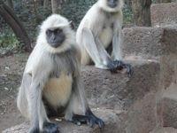 インド訪問記5 「プリーからブハネーシュバル経由、コルカタへ」 ブハネーシュバルの寺院