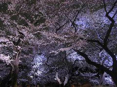 '13 千鳥ヶ淵緑道 夜桜ライトアップ