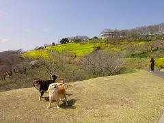 犬と一緒にマザー牧場へ