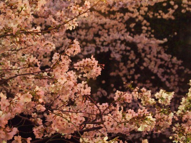 目黒川が職場に近いので、毎年この時期は朝晩寄り道して花見を楽しんでいます。<br />今年は去年できなかった夜桜撮影にもチャレンジ。<br />提灯の光が桜の立体感を演出し、とてもなまめかしく幻想的な風景を見ることができました。<br />毎年どんどん目黒川が好きになっていってます。来年も必ず。<br /><br />【2013.3.25追記】<br />フォートラベル公式Facebookページ(http://www.facebook.com/4traveljp)、<br />公式twitterアカウント(https://twitter.com/4travel)<br />にてご紹介いただきました☆<br /><br />【2014.3.14追記】<br />フォートラベルトップページ「本日のおすすめ旅行記」にてご紹介いただきました☆