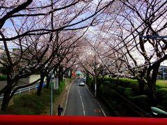 毎年恒例の桜坂