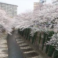 東京の地下鉄路線を歩こう! 第8弾:東西線: 地上部分・前編(中野~大手町)