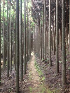 京都一周トレイル 北山西部コース(二ノ瀬~京見峠)
