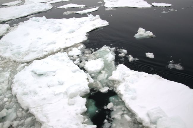 2日目、阿寒湖温泉を出発し、屈斜路湖で白鳥を鑑賞。<br /><br />その後、オホーツク海に一番近い駅の北浜からローカル線に乗り網走へ。<br /><br />昼食後、いよいよ今回の一番の目的である流氷砕氷船に乗りますが、事前にネットで調べると「流氷なし」の情報でガッカリ。<br /><br />ただの遊覧船に乗船になってしまうと思ってましたが、途中で少しですが流氷を見れて、オオワシにも遭遇しテンションが上がりました。<br /><br />今日の宿泊地は温根湯温泉で、途中でキタキツネとも遭遇。<br /><br />宿泊した温泉で毛ガニも食べ、温泉にもたっぷり浸かり充実した1日となりました。
