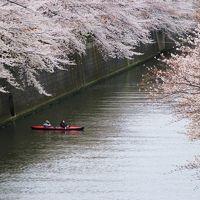 ☆☆SAKURA SAKU MEGURO RIVER 2013☆☆