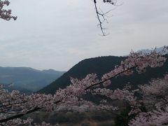 桜をたずねて2013春②市房ダム湖畔