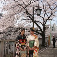 神田川の桜と椿山荘 Sakura of Kanda River and Chinzanso Garden