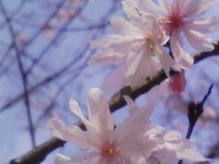 京都八瀬 3回目