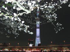 '13 隅田公園桜まつり 夜桜ライトアップ