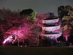 '13 椿山荘庭園の夜桜