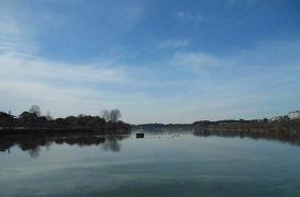 千波湖でバードウォッチング [2013](1)
