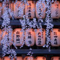 京都 桜めぐり~花山稲荷神社、醍醐寺、井出 玉川堤、大石神社