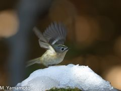 冬の葛西臨海公園の鳥