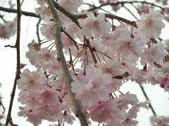 2013春 高知旅