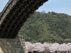 桜カンタービレ 錦帯橋&いろり山賊
