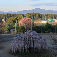 NHK放映の『孝子桜(こうしさくら)』を撮る