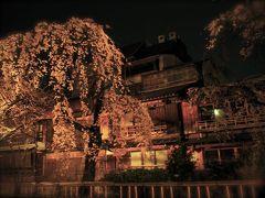 ★ちょこっとちょこっと京都 白川の夜桜とか 夜カフェはしご とか。★