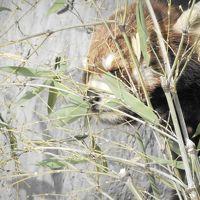 2013年春なのに雪がはらり~それもまたいとをかし旭山動物園 スープカレー木多郎 天然酵母道産小麦使用のこだわりドーナッツ屋さん
