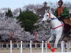 姫路でも流鏑馬があっただなんて!! 20年に一度の三ツ山大祭見物