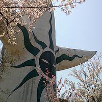 桜満開の万博公園と国立民族学博物館