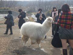 20代女一人旅☆アルパカ牧場 那須ビッグファーム-クラレちゃんに会いに行ったよ!-