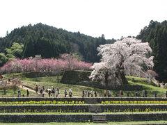 2013年大和路の桜① 又兵衛桜、大野寺枝垂れ桜