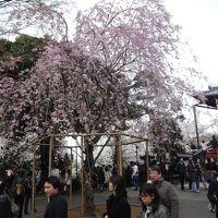 花見だワッショイ 上野公園界隈へ散策へ やっぱりアメ横への行かねば